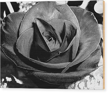 Awakened Black Rose Wood Print
