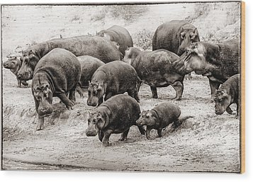 Aware Hippos Wood Print