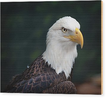 Awesome Eagle Wood Print by Tammy Smith