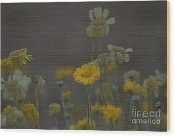 Wood Print featuring the photograph Az Flowers by Rod Wiens