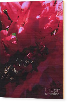 Wood Print featuring the photograph Azalea Abstract by Robyn King