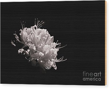 Azalea Black And White Floral  II Wood Print by Holly Martin