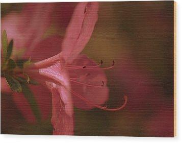 Azalea Festival  Wood Print
