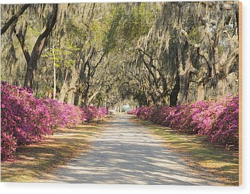 Wood Print featuring the photograph azalea lined road in Spring by Bradford Martin
