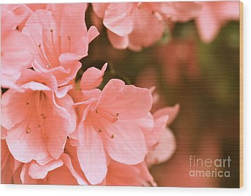 Wood Print featuring the photograph Azalea Victorian by Cathy Dee Janes