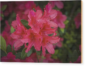 Azaleas 1 Wood Print