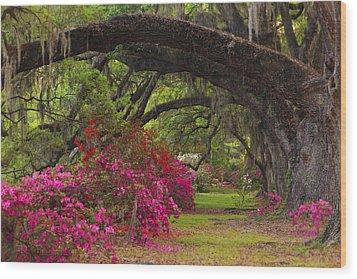 Azaleas And Oaks Wood Print