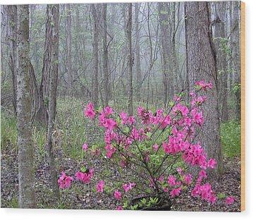 Azaleas In Fog Wood Print