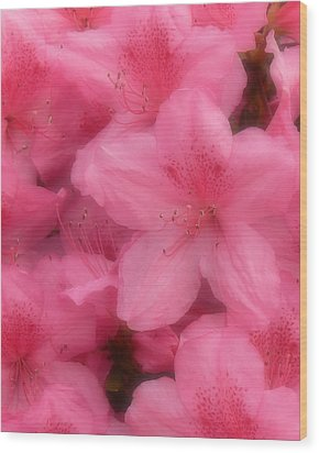 Wood Print featuring the photograph Azaleas In Soft Pink by MM Anderson