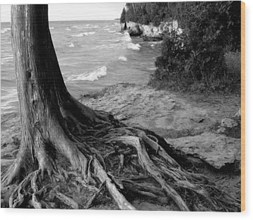 B And W Cedar Roots At Cave Point Wood Print by David T Wilkinson