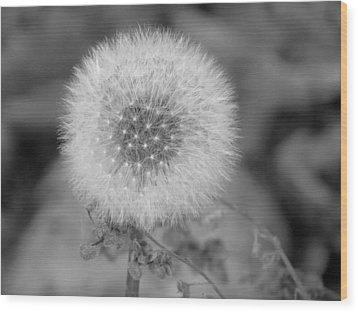 B And W Seed Head Wood Print by David T Wilkinson
