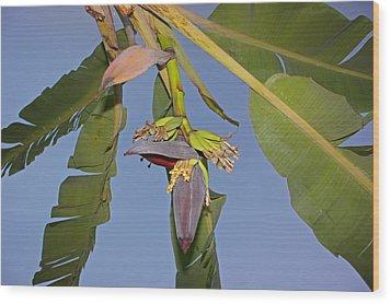 Babies Of Banana Wood Print by Chikako Hashimoto Lichnowsky