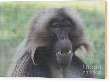 Wood Print featuring the photograph Baboon by John Telfer