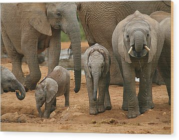 Baby African Elephants Wood Print