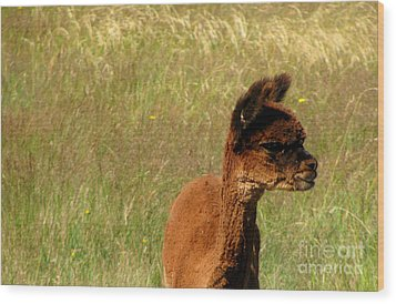 Baby Alpaca Wood Print