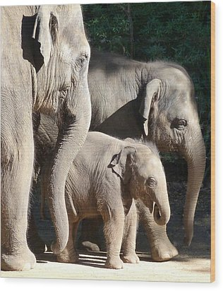 Baby Asian Elephant Socialising Wood Print by Margaret Saheed