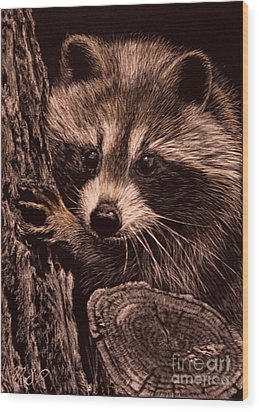 Baby Bandit Wood Print
