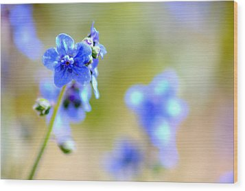 Wood Print featuring the photograph Baby Blu by Martina  Rathgens