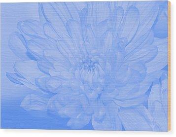 Baby Blue 3 Wood Print by Carol Lynch