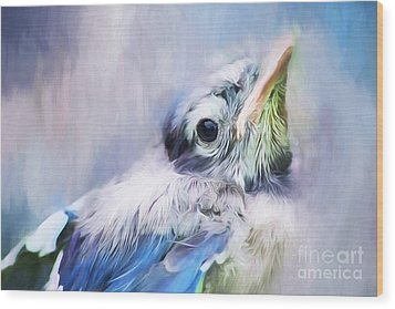 Baby Blue Jay Wood Print