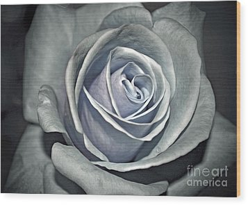 Wood Print featuring the photograph Baby Blue Rose by Savannah Gibbs