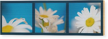 Baby Blue Triptych Wood Print by Lisa Knechtel