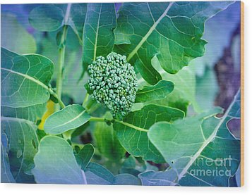 Baby Broccoli - Vegetable - Garden Wood Print by Andee Design