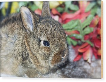 Baby Bunny Rabbit Wood Print by Karon Melillo DeVega