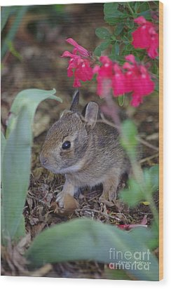 Wood Print featuring the photograph Baby Bunny by Tannis  Baldwin