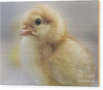 Baby Chicken Wood Print by Darleen Stry