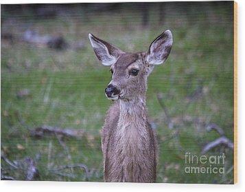 Baby Deer Wood Print