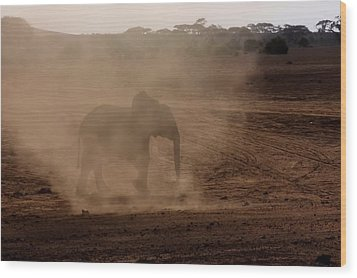 Wood Print featuring the photograph Baby Elephant  by Amanda Stadther