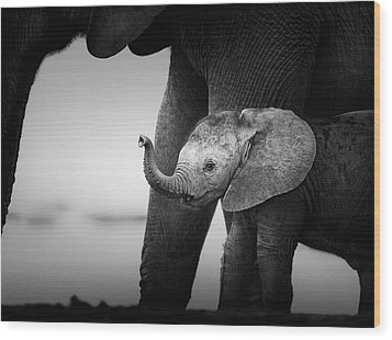 Baby Elephant Next To Cow  Wood Print by Johan Swanepoel