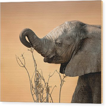 Baby Elephant Reaching For Branch Wood Print by Johan Swanepoel