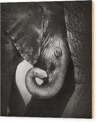 Baby Elephant Seeking Comfort Wood Print by Johan Swanepoel