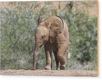 Baby Series Elephant Wood Print