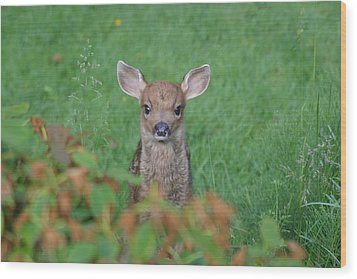 Baby Fawn In Yard Wood Print by Kym Backland
