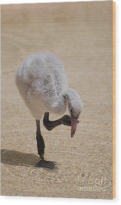 Baby Flamingo Wood Print by DejaVu Designs