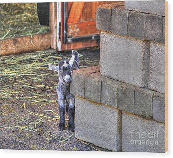 Baby Goat Wood Print by Jimmy Ostgard