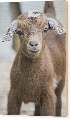Baby Goat Wood Print by Shelby  Young