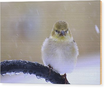 Baby Its Cold Outside Wood Print by Brenda Bostic