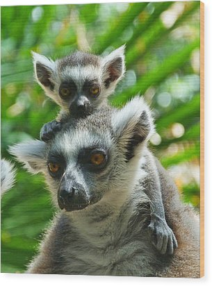 Baby Lemur Views The World Wood Print