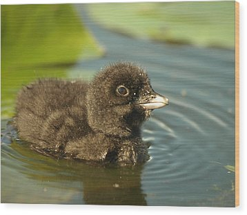 Wood Print featuring the photograph Baby Loon by James Peterson