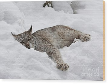 Baby Lynx Watching You Wood Print by Inspired Nature Photography Fine Art Photography