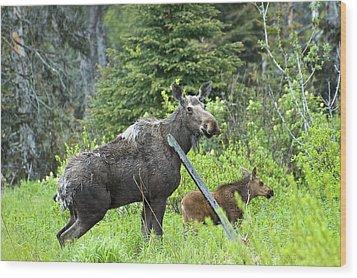 Baby Moose - Mom Wood Print