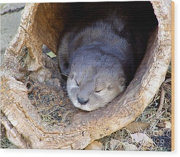 Baby Otter Wood Print by Mary Deal