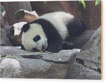 Baby Panda Wood Print by John Telfer