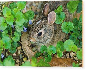 Baby Rabbit Wood Print