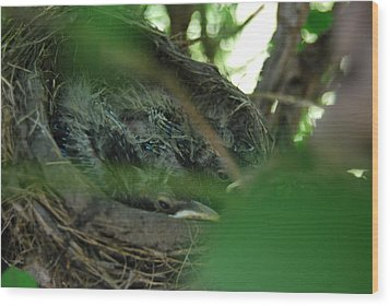 Wood Print featuring the photograph Baby Robins Nesting by Ramona Whiteaker