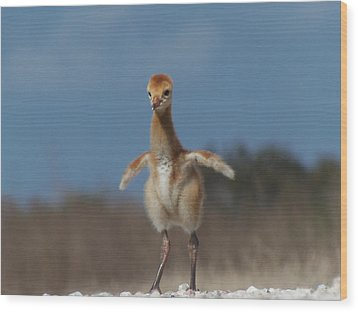 Wood Print featuring the photograph Baby Sandhill Crane 071 by Chris Mercer